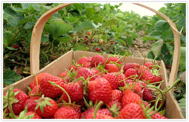 2019 Baldwin County Strawberry Festival